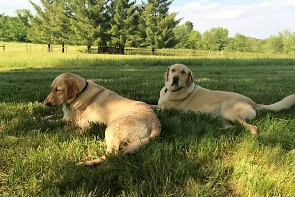 alum coleman-dallas with sibling layla at their farm
