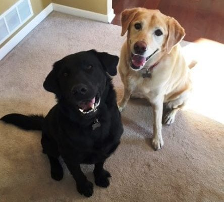 alum-bayer-and-sibling-izzie-fix