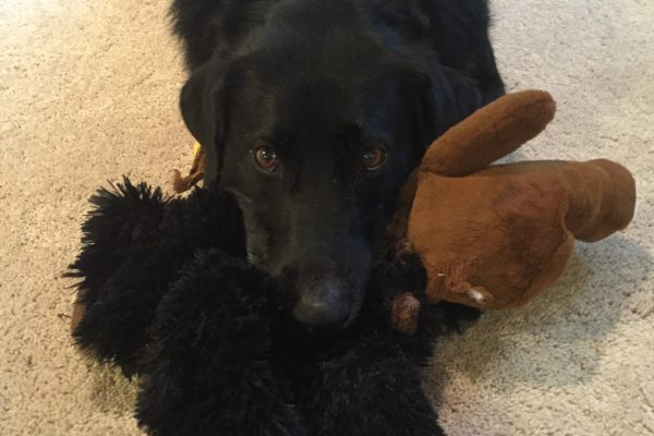 Stanley with Gorilla toy