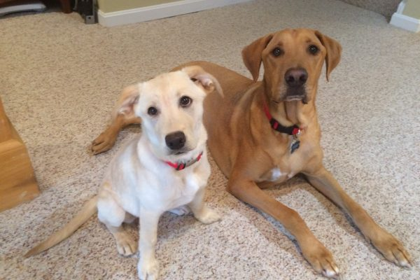 alum-liberty-belle-and-boone-10-29