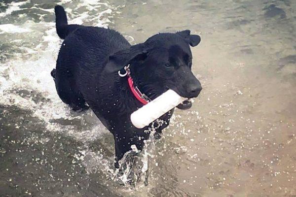 alum Lily Fleenor Swimming