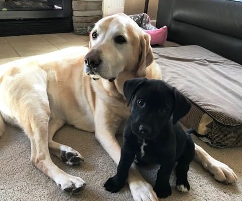 alum Winter-Charlie and big brother Rocky 11-26-17