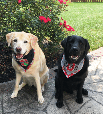 alum bayer-bear and sibling lizzie
