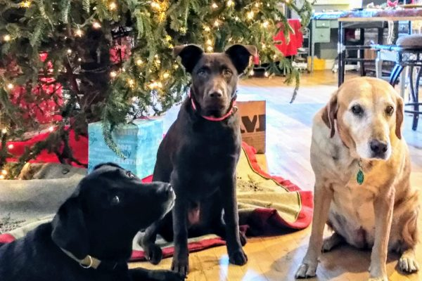 alum grizzly-bear and pack holiday 12-25-17