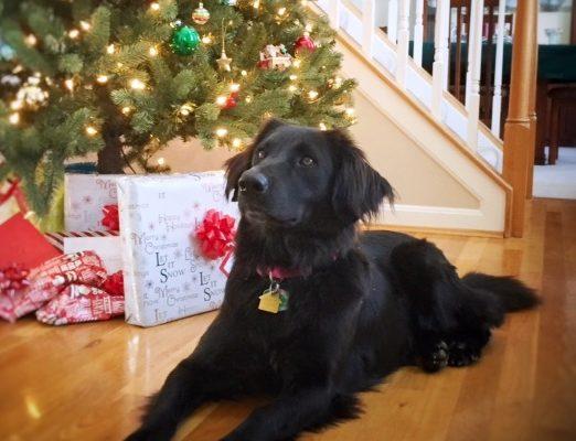 alum lola's first christmas 12-30-17