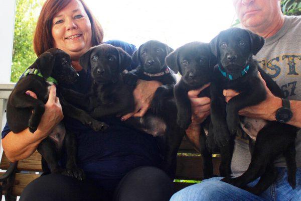 puppies 9 - black 1 10-7-17