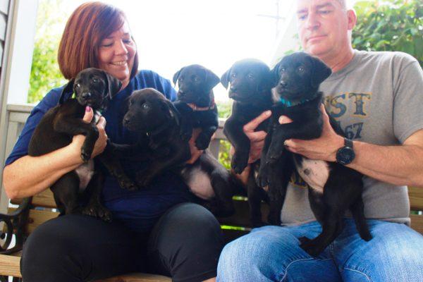 puppies 9 - black pups amy, allie, apache, astro, arnold