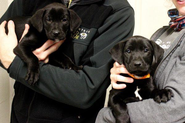 puppies - winter litter 1