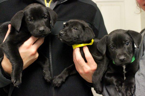 puppies - winter litter 11-18-17